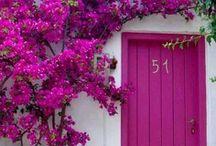 Purple is love. . / by Cole Lynn
