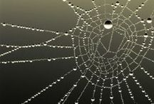 World Wide Webs / Creature's webs / by Jackie