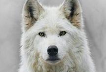 Wolf LUPI