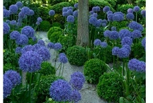 Gardens + Landscapes