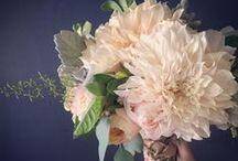 Wedding Gallery / by Allison Beavers