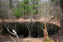 Vernal Pools / by Ann DeMarle