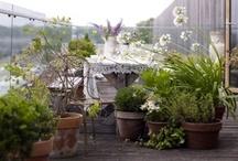 balcony garden / garden