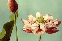 Floral et Fantaisies végétales