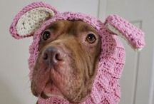 The Well Dressed Dog / accessories, costumes, clothes to stay warm and dry