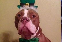 Holiday Pet Photos / Dogs, Cats, Pigs... Christmas, Hanuakah, Easter...