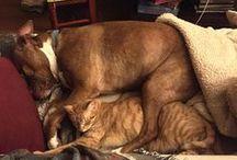 Pitties & Kitties