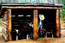 capriculture / The science of breeding goats. / by inkspot