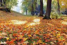 its fall yall... / a beautiful time of year ....