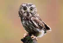 Love for Owls :-) / by Angela Lail