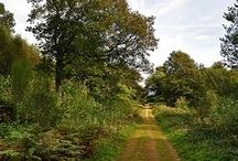 a well worn path / lets take a walk and clear our heads...