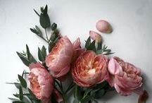 FLOWERS. / Fresh, fresher, floral. Here your find the most blooming inspiration.