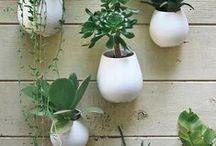 .: In The Garden :.