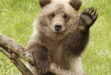 Ursine / Bears / by Mrs. Europaea