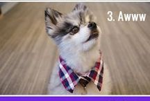 Pet Projects + DIYs / Spoil your pet with DIY treats, toys, accessories and clothing. / by Petfinder.com