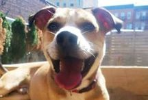 Sun's Out Tongues Out / It doesn't get cuter than a dog with its tongue out. / by Petfinder.com