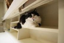 The Pet-Friendly Home / Create a safe and loving home for your expanding four-legged family. / by Petfinder.com