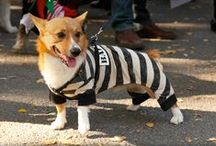 Howl-o-ween / See how adoptable (and adopted!) pets celebrate Halloween! / by Petfinder.com