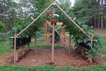 School garden / outdoor classroom lessons & ideas / by Elizabeth Lowe