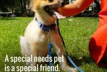 Super Pets / Special needs pets? More like Super Pets! Celebrate these amazing companions with tips and success stories. / by Petfinder.com