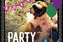 Holiday Pet Party! / You encounter all sorts of personalities at holiday parties! Do any of these pets remind you of someone you know? / by Petfinder.com
