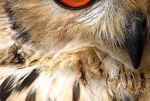 owls / by Cydney Perske