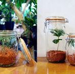Growing greens / Beautiful plants and flowers to grow in Le Parfait jars