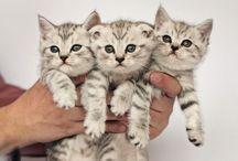 kitty cats!!