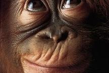 Monkey Business / I love monkeys!