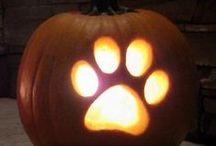 Halloween / Decorating & Recipe Ideas