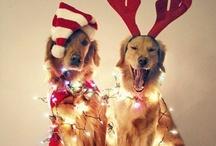 holiday cheer. / by Lauren Schweitzer