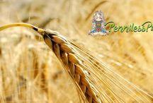 Lammas (Lughnasadh)- August 1st / Spells and Rituals for Lamma (Lughnasadh)  #Lammas #Lughnasadh #August