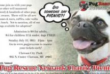 Pug Rescue Network / www.pugrescuenetwork.com / by Pug Rescue Network