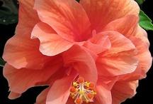 Crayola Colors...Coral, Peach & Salmon / Color / by Karen Knutzen