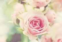 Flowers, birds, butterflies, nature