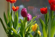 Gardening/Greenery / by Susan Yang