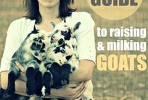 Goats / by Kelly Hanson