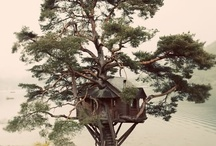 Out on a limb (Treehouses)