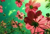 Flower stand / by Issy Jimenez