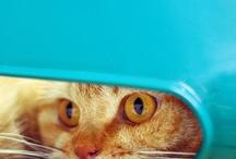 sweet fur <3 / by Marissa Sweeny