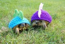 Knitting & Yarn Crafts / by Tracy Tee