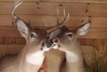 Oh Deer!  / Deer & things... / by Ashley Cannon Stephens