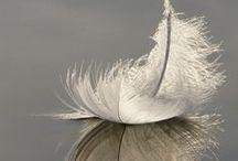 feather / перья