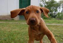 {Puppy Love} / by CoffeeandKitties *