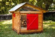 On Trend: Awesome Chicken Coops!