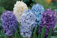 Flowers / Flowers I love with an abundance of blue flowers, which I love most of all. / by Charlynn Greene