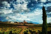 Enotourism / Wine Tourism - Enoturismo / Rutas del vino. Enoturismo en bodegas. Viajes relacionados con el mundo vinícola. Turismo del vino.