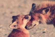 |fur creatures / by Summer Wood