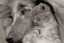 Cat Naps / by Sandy Bobbitt