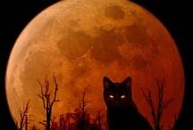 Black Cat / by Sandy Bobbitt